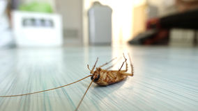 Dead cockroach on the floor. After being hit by pesticides stock photos