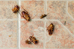 Dead cockroach on the floor after being hit by pesticides stock photo