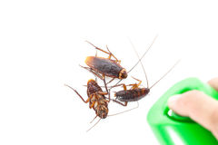 The dead cockroach, Hand kill a cockroach with  spray. Royalty Free Stock Photo
