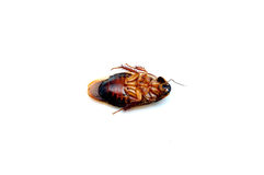 Dead cockroach Stock Photo