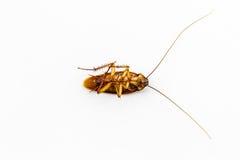 Dead cockroach. Stock Image