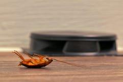 Dead cockroach and roach trap. stock photos