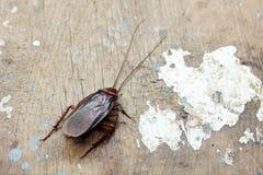 Dead cockroach Stock Image