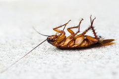 Dead cockroach on white back ground. Royalty Free Stock Photos