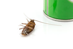 Dead cockroach on a white background. Stock Photos