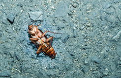 Dead cockroaches on the cement floor. Healthcare concept Royalty Free Stock Images