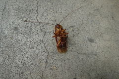 Dead cockroaches on floor. Background royalty free stock photo