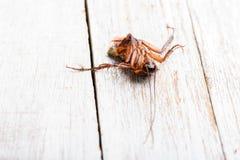 Dead cockroaches on floor. Dead cockroaches on the white floor floor stock photos