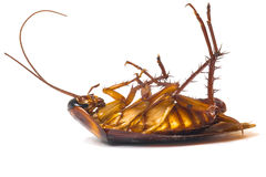 Dead cockroaches. Isolate white background stock images
