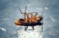 Dead cockroaches in the sun on the marble floor. Healthcare concept royalty free stock photos