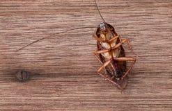 Dead cockroaches Stock Photos