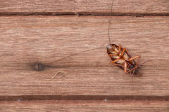 Dead cockroaches Royalty Free Stock Photos