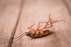 Dead cockroaches Stock Photography