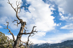 Dead Colorado Tree Stock Photography