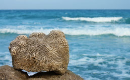 Dead coral Stock Images