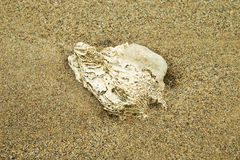 Dead coral Stock Photo