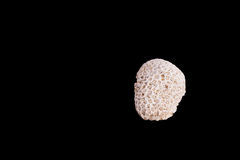 Dead coral flower shape isolated on black Stock Images