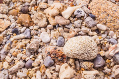 Dead coral flower shape Royalty Free Stock Photography