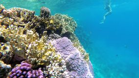 Dead Coral Reef with Colorful Tropical Fish in Red Sea. Egypt.