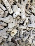 Dead coral royalty free stock photos