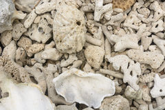 Dead corals Stock Image