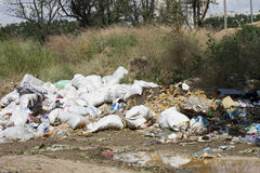 Dead cow in garbage dump Royalty Free Stock Image