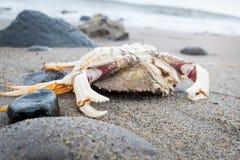 Dead crab Stock Photos
