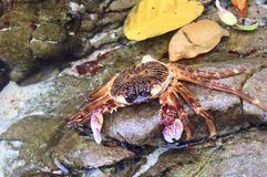 Dead crab royalty free stock photo