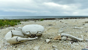 Dead crab Stock Photos