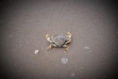 Dead crabs Stock Image