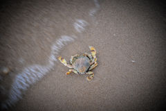 Dead crabs Royalty Free Stock Photography