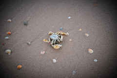 Dead crabs Royalty Free Stock Images