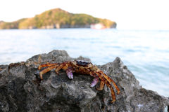 Dead crabs on the rocks. Royalty Free Stock Photos