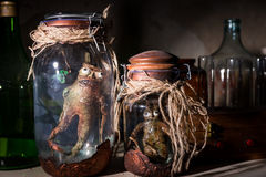 Dead creatures inside mason jars Royalty Free Stock Photos