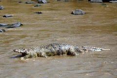 Dead crocodile in Mara River, Maasai Mara Game Reserve, Kenya Royalty Free Stock Image
