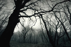 Dead dark winter tree in the forest. Stock Photo