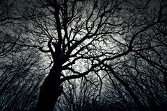Dead dark winter tree in the forest. Royalty Free Stock Images