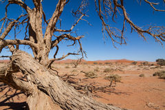 Dead desert tree Royalty Free Stock Photography