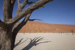 Dead desert tree royalty free stock images
