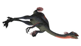 Dead Dinosaur Gigantoraptor Stock Photo