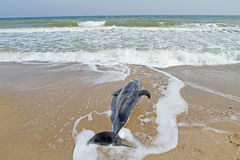 Dead dolphin Stock Photo