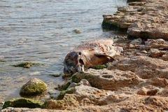 Dead  dolphin. Stock Photo