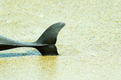 Dead dolphin Stock Images
