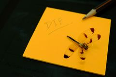 Dead Dragonfly on the orange paper and black of background. Dead Dragonfly on the orange paper and black of background stock photography