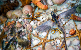 Dead Dried Fishes and Seashells Stock Photography