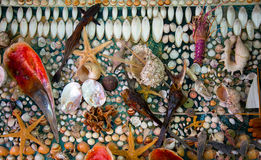 Dead Dried Fishes and Seashells Stock Images