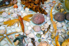 Dead Dried Fishes and Seashells Royalty Free Stock Photos