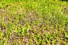 Dead and dried lawn stock photos