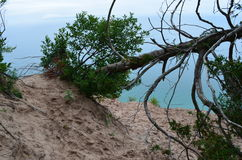 Dead Drift Wood Tree Stock Photo