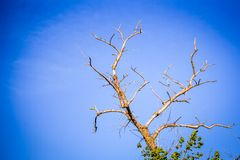 Dead dry branches of a tree against the sky Royalty Free Stock Images